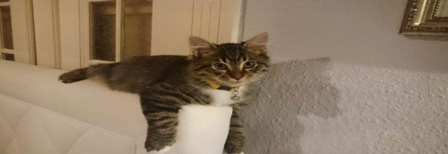 Kediler Hakkında Yanlış Bilinen Doğrular ait tanıtım resmi