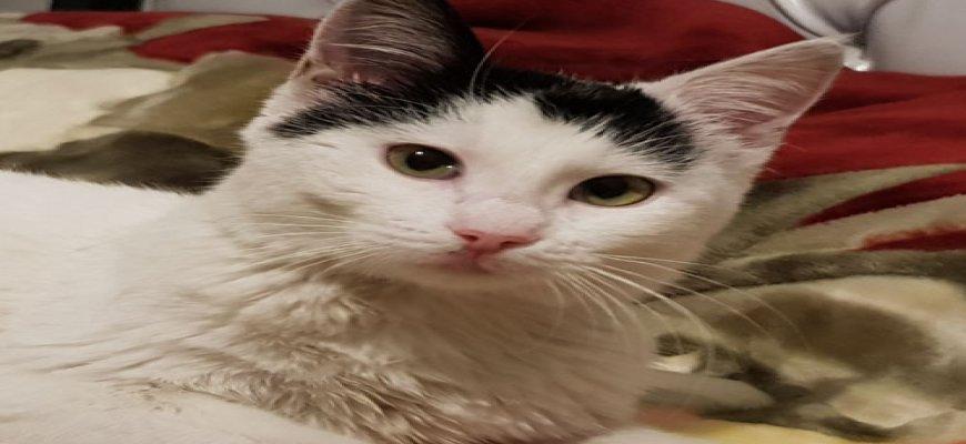 Kedi Misafirlik
