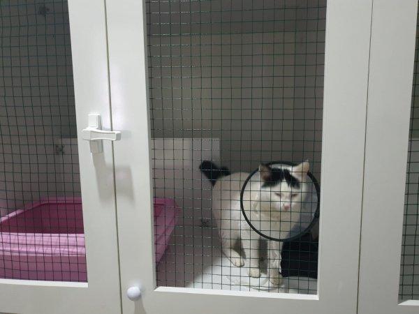 Kedi Misafirlik isimli hizmete ait 1. resim