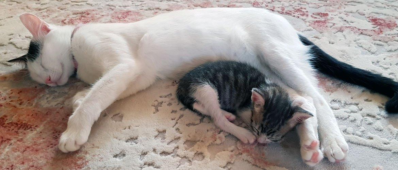 Hayvanlar en uysal dostlarımızdır.